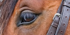The Worst Advice We've Ever Heard About Professional Horse