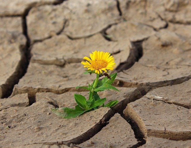 flower, life, yellow flower